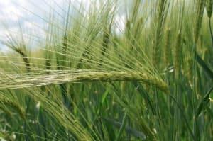 Crop Diversification Question