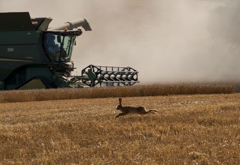 Hare-Combine-Ragley.jpg#asset:2444