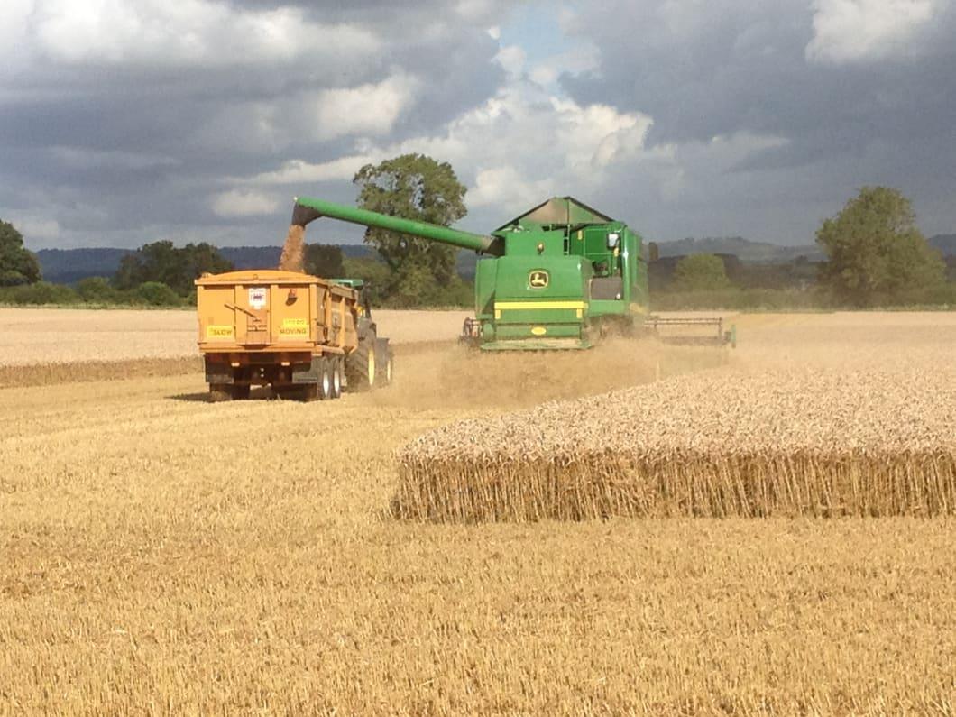 Harvest-May-2013.jpg#asset:2201