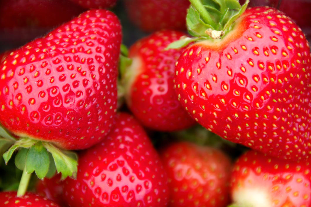Strawberry1.jpg#asset:2888