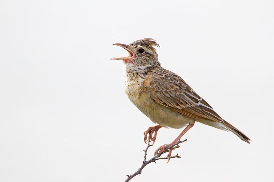 die ballade von singvögel und schlangen