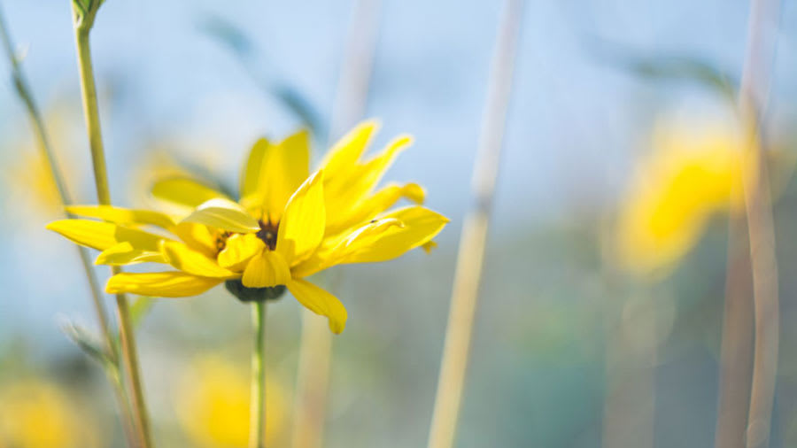 ​yellow flower in the wild