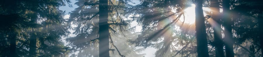sunlight streaming in through forest trees