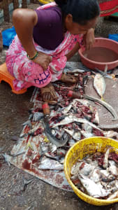 Gutting fish, season docks