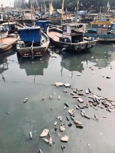 Pollution Sassoon Docks