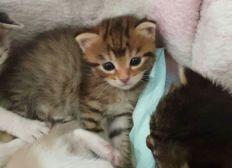 Opération 1e pour les chatons du coeur