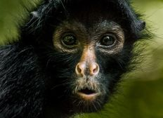 Primate Conservation Research Volunteering