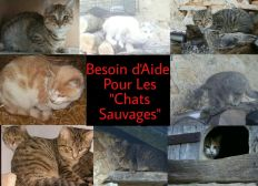 Aide Chalet pour chats
