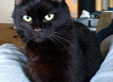 Spenden für Bella Tierarztkosten (Sterilisation und Zahnsteinentfernung)