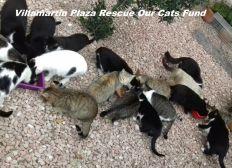 Villamartin Plaza Help Our Cats Fund