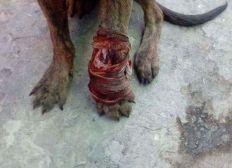 Ayuda para los perros callejeros de Guatemala