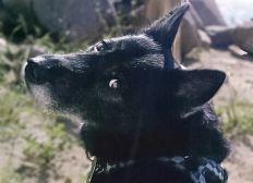 Liebe Hundefreunde bitte helft uns!