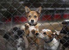 Ayuda a los refugios animales en España