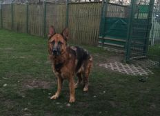 Protection of Animals - Tierheim Bonn