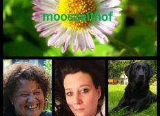 Mooszeithof-Herzlich Willkommen zu deiner individuellen Auszeit