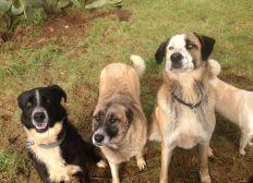 Hilfe für die Straßenhunde in Apulien / Süditalien