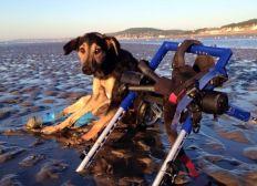 Refuge pour chiens handicapés