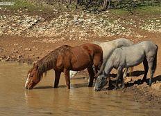 Eine zweite Wasserstelle für die wild lebenden Pferde von Mostar in Bosnien-Herzegovina