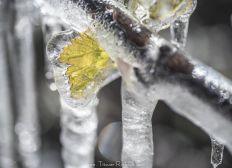 Cagnotte solidaire : Les vignerons touchés par le gel
