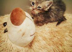 Aidez nous pour les chats de l'asso