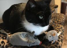 Mäuse für die Stubentiger