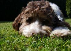 Lebershunt OP für Marla