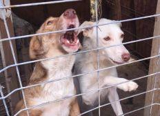 Hilfe für Silvia's Hunde