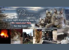 Help for Rascoon