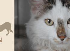 Collecte ERA - Aide Aux Frais Vétérinaires