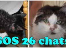 SOS 26 chats
