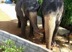 The Ananda Elephant Sanctuary