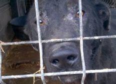 Letzte Rettung für zum Tode verurteilte Hundeseelen