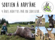 Solidarité pour Arpi'âne - 4 ânes de randonnée tués par un chasseur !