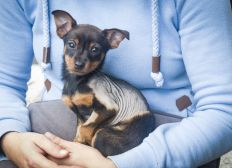Lebensrettende OP für Hundebaby Layla