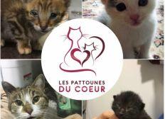 Association Les Pattounes du Coeur