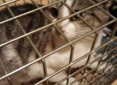 TNR....FERRELL CATS AND KITTENS