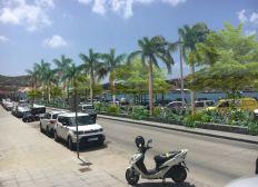 Operation Cyclone Irma Public Gardens