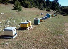 U.B.C (Urban Bee Collectiva) needs your help !