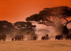 African Restoration e.V.
