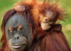 Stella's Orangutan Shelters