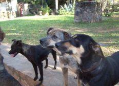 Hilfe für Hunde in Paraguay