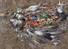Pour la fin des déchets dans les eaux