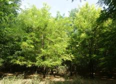 Children's Forest in Rumänien