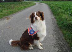 Aktualisiert: Finanzielle Unterstützung und Solidarität für Thorsten und seinen Blindenführhund