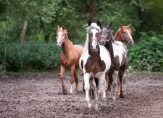 Hilf unserem Gnadenhof für misshandelte Pferde