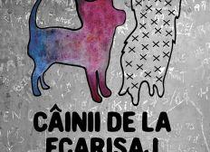 Câinii de la Ecarisaj - Straßenhunde Rumänien - Street dogs Romania