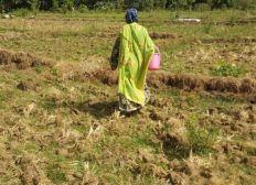 Développement agricole des femmes du village de Yaféra