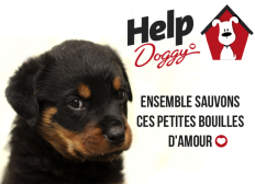 Soutien à l'association Help doggy