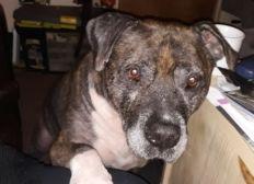 Animals of Hope Dog & Cat Rescue