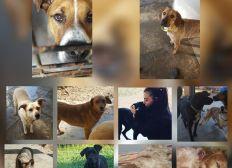 Association SPA (Société Protectrice Des animaux)
